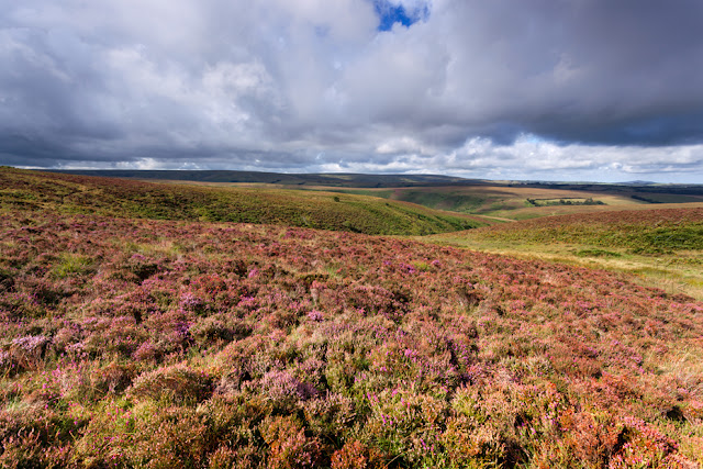 Heather clad moorland in Exmoor by Martyn Ferry Photography