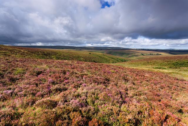Heather clad moorland in Exmoor by Martyn Ferry Photography