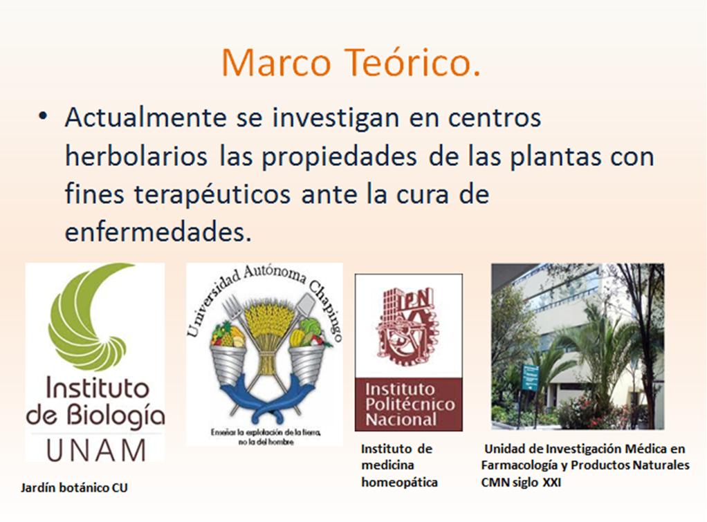 Plantas medicinales presentaci n en power point - Marcos para plantas ...