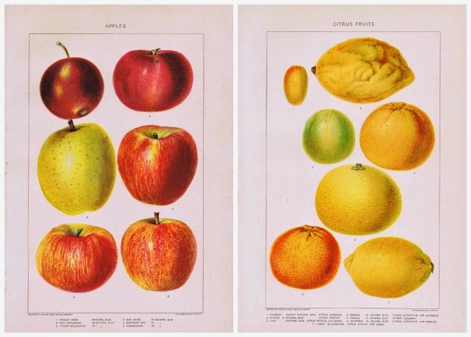 Antique Fruits Free Printables for Wall Art Kitchen Decor, iron-on transfers via knickoftimeinteriors.blogspot.com