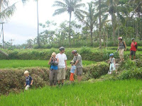 Rice Paddies Walking