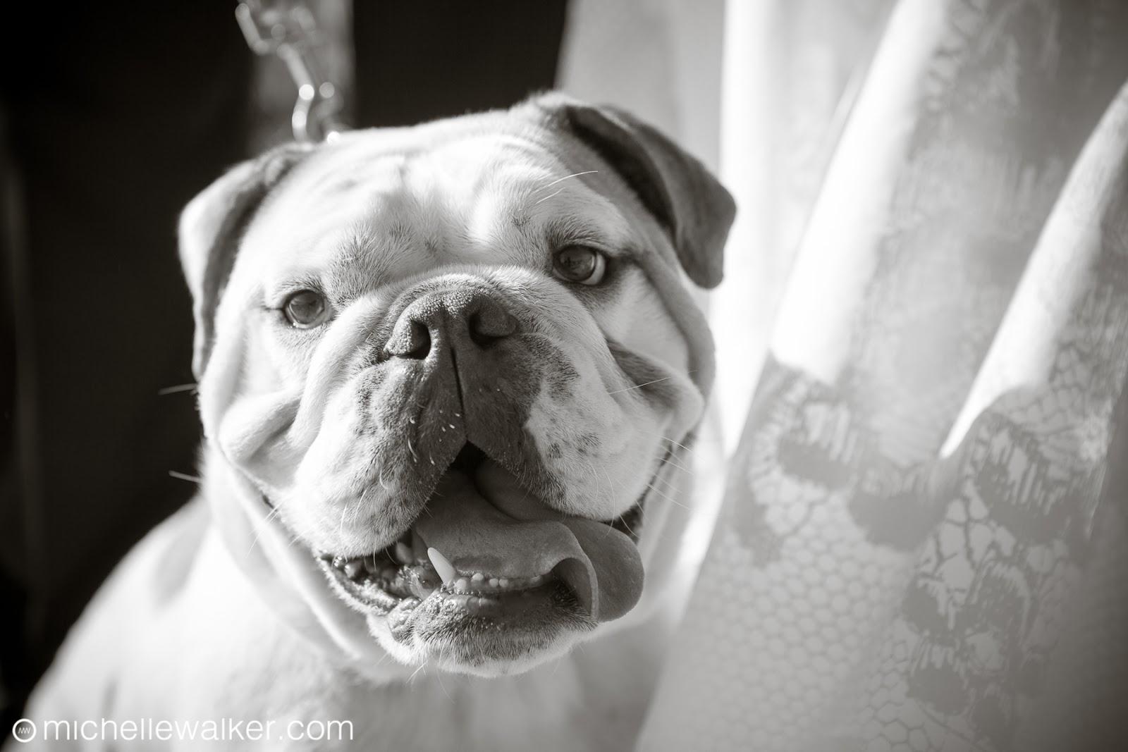 Michelle Walker Photography Ritz-Carlton Half Moon Bay Wedding