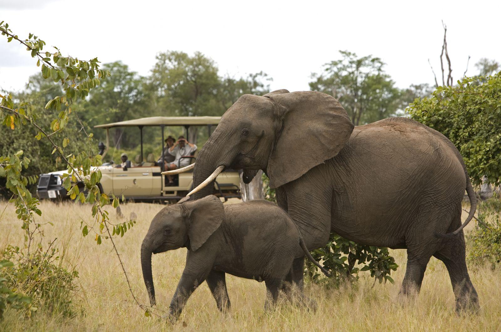 Elephant | HD Wallpape...