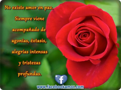 rosas con frases de amor para facebook