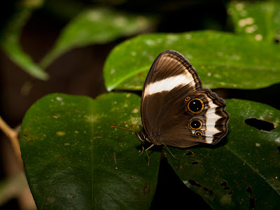 Butterfly in shade dappled light