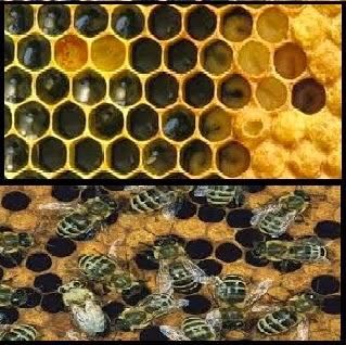 خلية نحل - منحل - مشروع منحل - مشروع انتاج عسل نحل