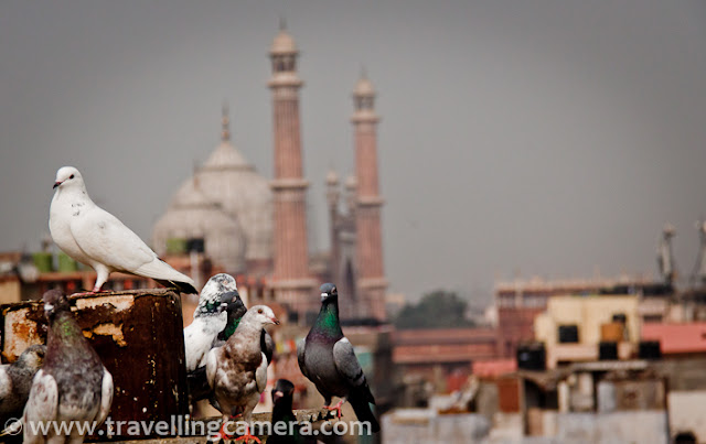 Last weekend I visited Jama-Masjid in Old Delhi and also interacted few folks around this place. During the visit I met a very interesting family who also offered me to come on roof-top to have a different view of Old Delhi (Dilli-6). On roof-top, there were approximately 60 pigeons. One of the gentleman also told be about a unique trend of Old Delhi. All these pigeons fly in a group and at times they make a huge groups of around 1000 pigeons. When any of the owner ask his/her group to come back, most of the others also prefer to check at home. During such flights, at times some pigeons plan to join other group and go to other house. In this case original owner loose the right to get that pigeon back. If s/he wants that pigeon back, appropriate money needs to be paid as per breed of that pigeon. And this payment has no guarantee that pigeon will not go to other groups. This thing is religiously followed in Old Delhi region !!!