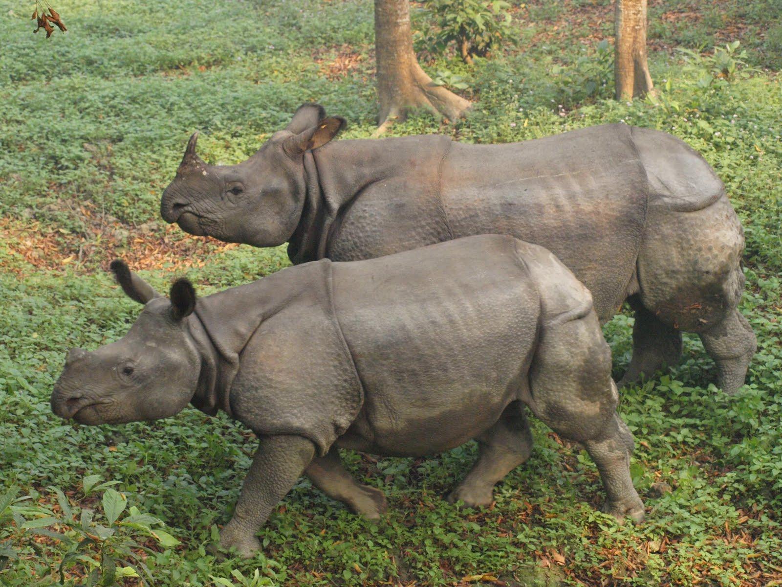 Single horned Rhino. | Flickr - Photo Sharing!