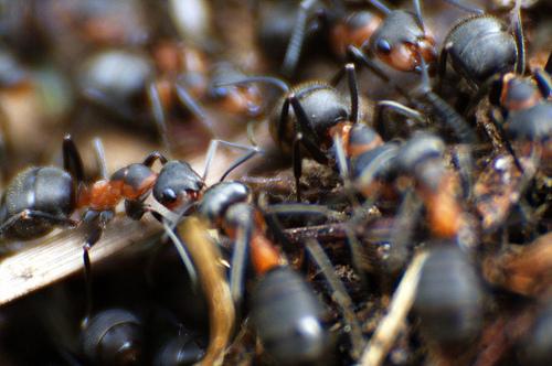 Grupoartema recomendaciones para evitar plagas - Plaga hormigas en casa ...