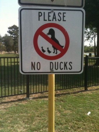 bizarre sign, no duck please