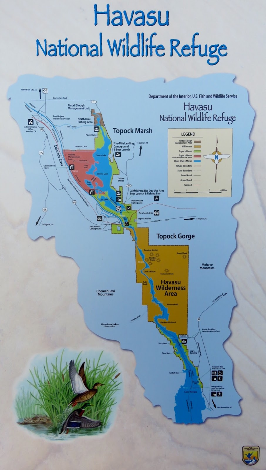 the havasu national wildlife refuge encompasses 37 515 acres it protects 30 miles and 300 miles of shoreline of the colorado river from needles ca