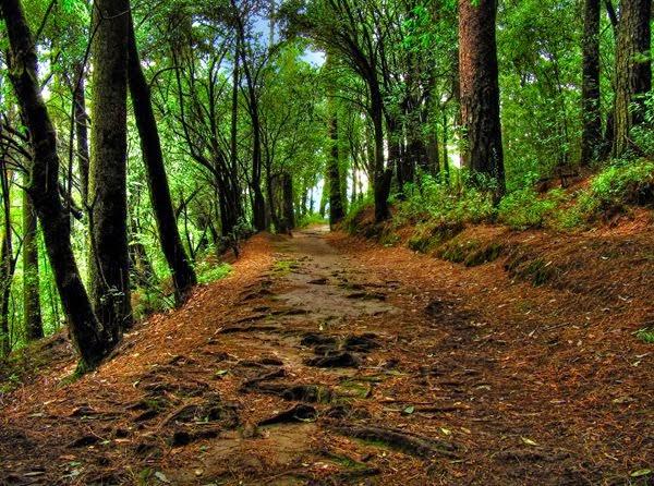 Bosque del Ajusco