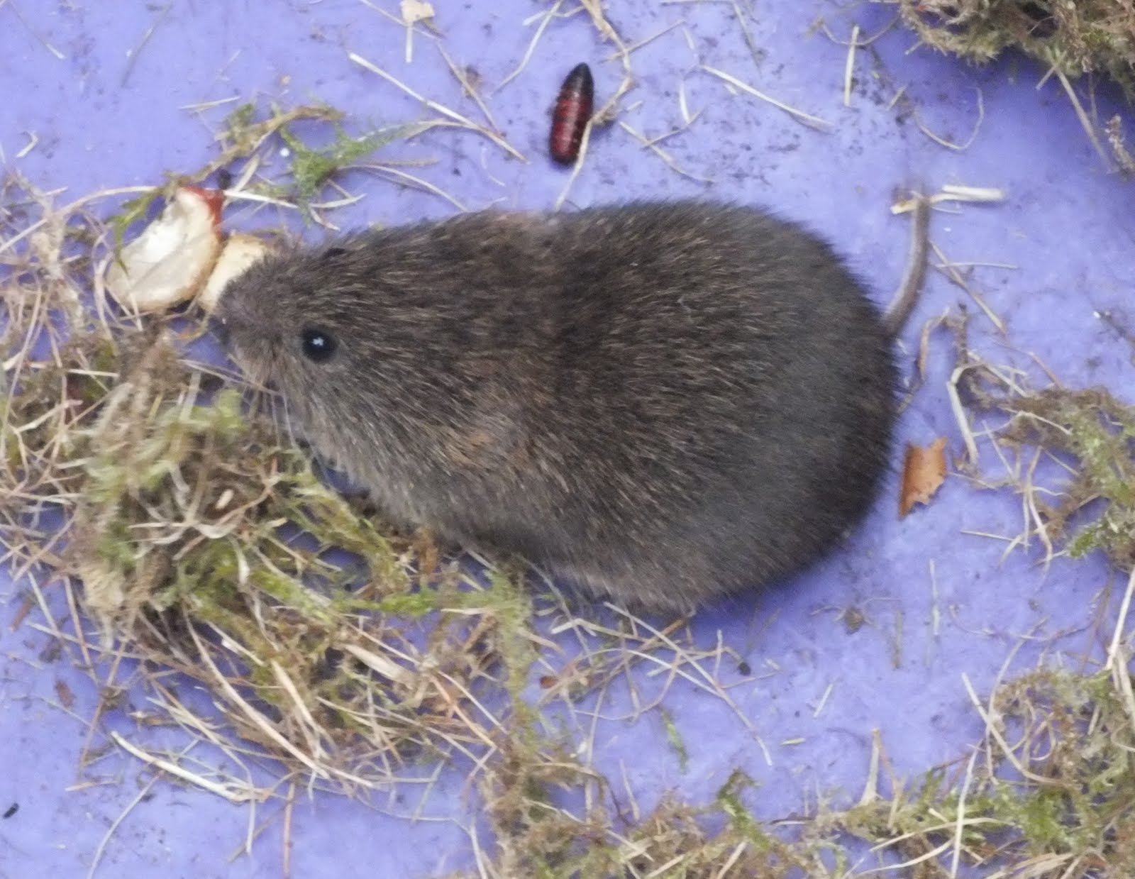 About a brook small mammals on whitchurch nature reserve - Volle trap ...