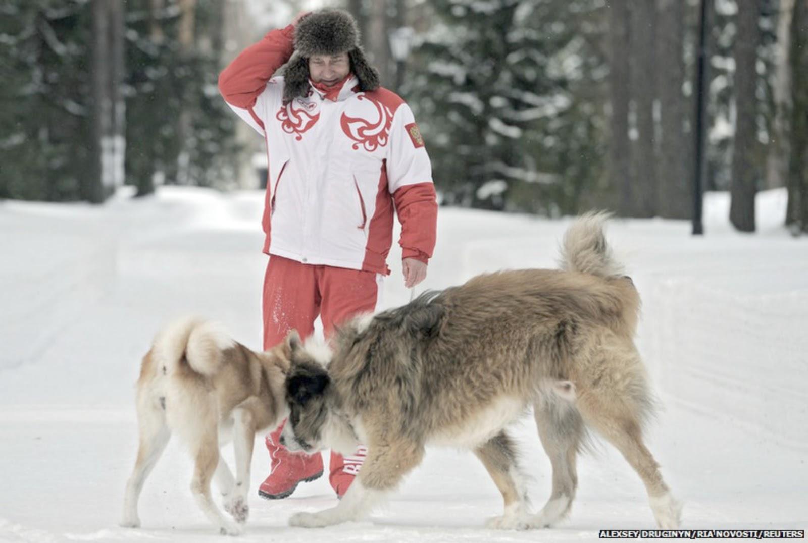 Caucasian Mountain Dog Russian Prison | www.imgkid.com ...