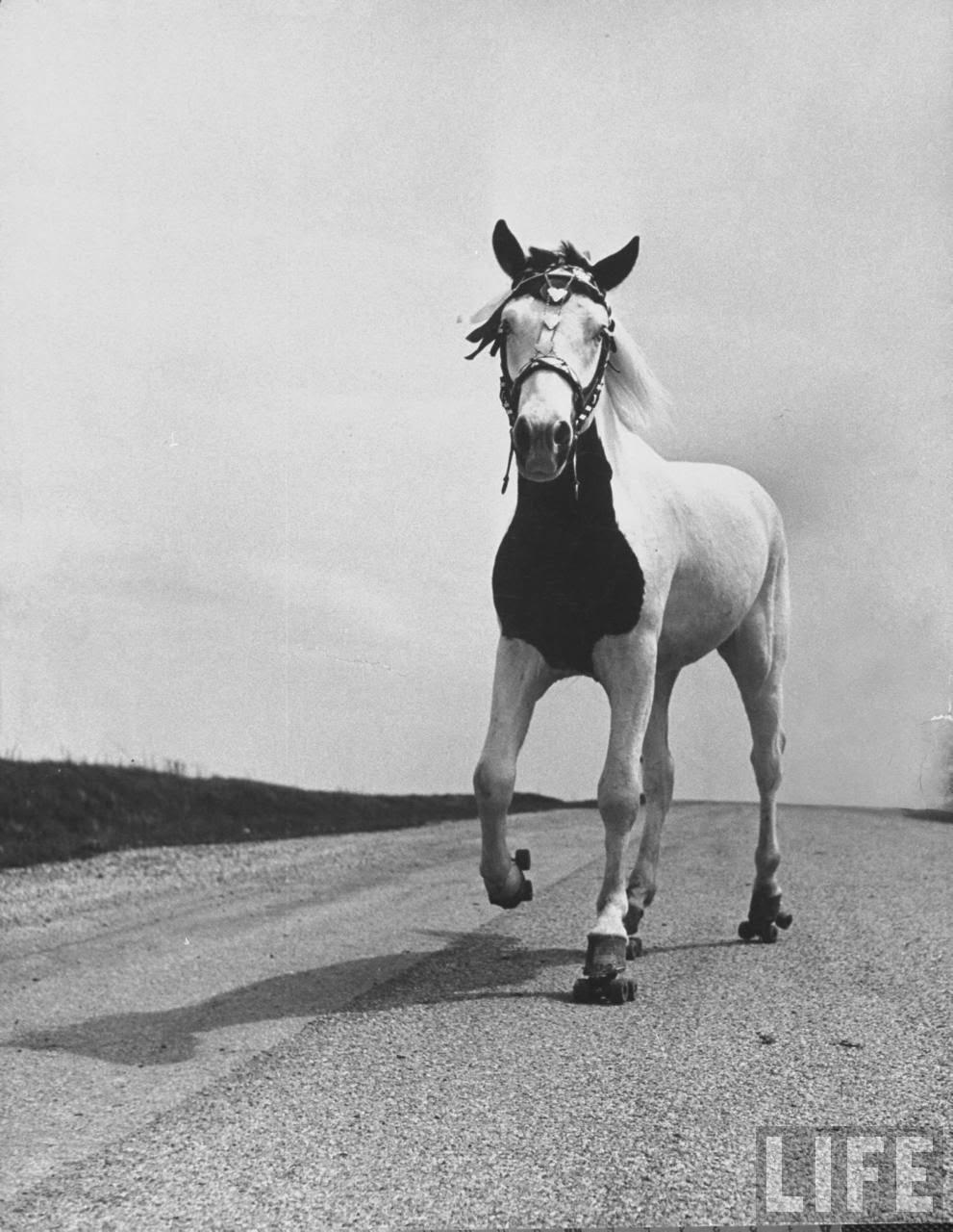 Roller skates vintage - Jimmy The Roller Skating Horse 1952