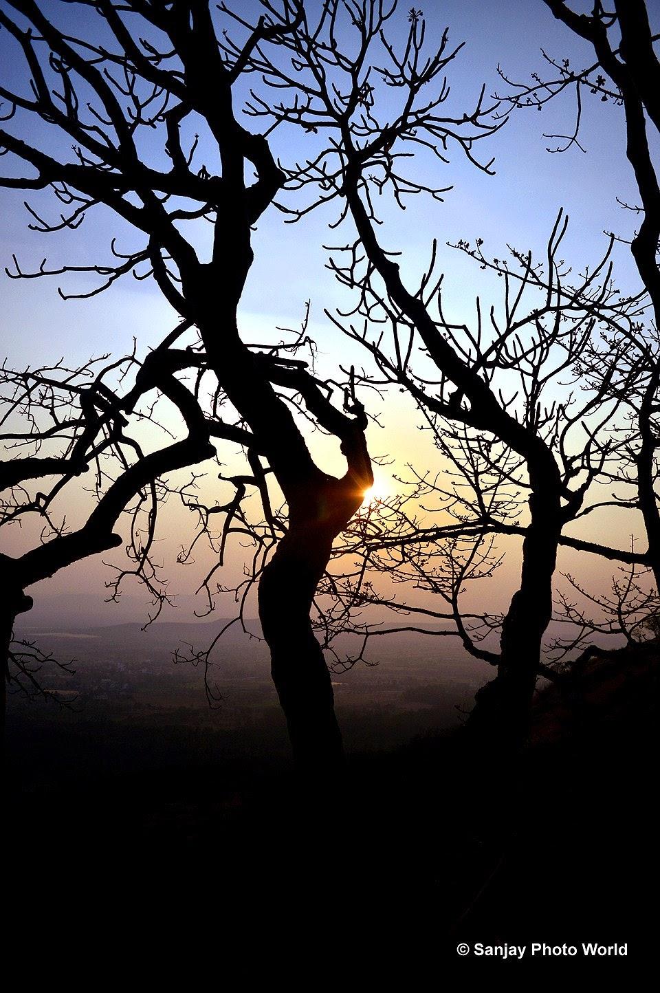 sun cross tree