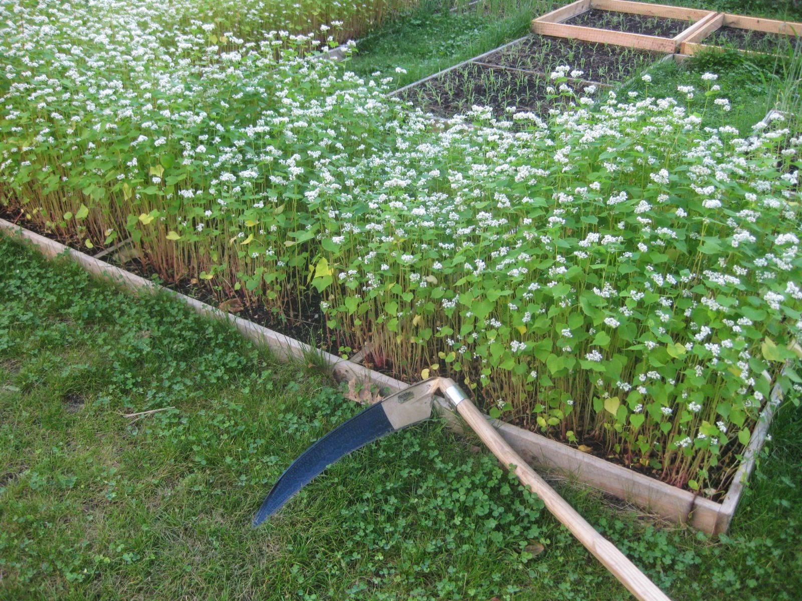 Tooling Up Best garden tool for 2014 Austrian Scythe