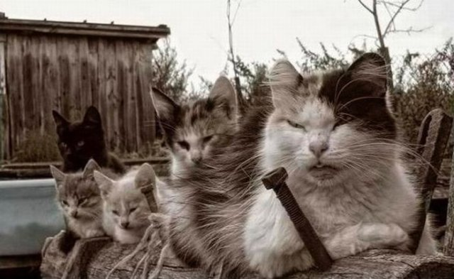 Most Angry Cats Photos Seen On www.coolpicturegallery.us