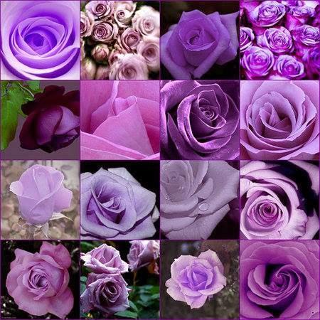 Rosas são sempre encantadoras!