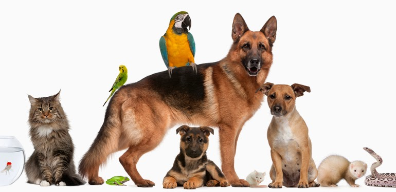 Resultado de imagem para imagem para animais domesticos
