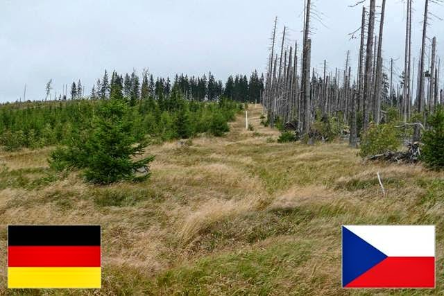 This border shows two rather different approaches to a bark beetle infestation. Germany culled and replanted the tress whereas on the Czech Republic side, the trees were neglected.