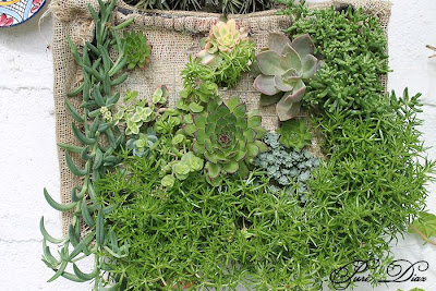 Manualidades puri diaz jardin vertical reciclando for Jardin vertical exterior