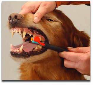 Cuidado al cepillar los dientes de tu perro