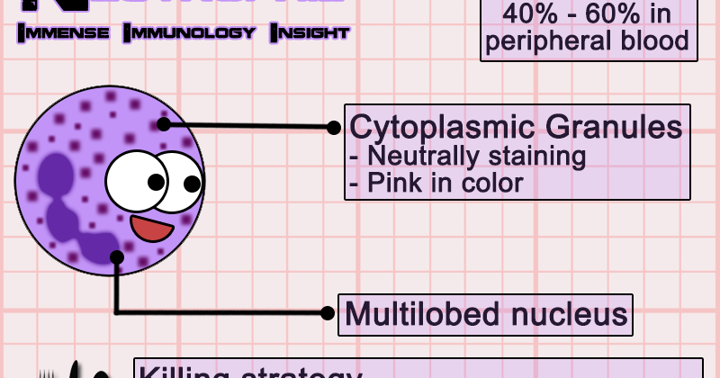 immense immunology insight  neutrophils simplified