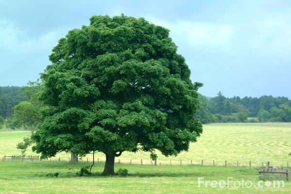 Renungan kisah pohon , daun dan angin