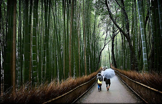 Bamboo Forest at Arashiyama Park