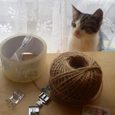 W Krysiakowie - wizyta kotka