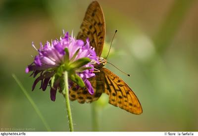 Fotografia di una farfalla appoggiata su di un fiore