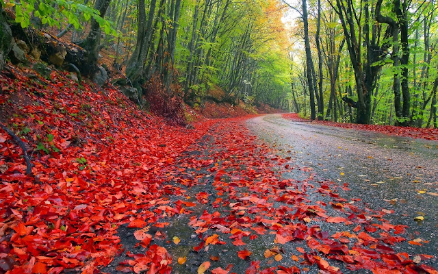 Rainbow Autumn Leaves On The Street