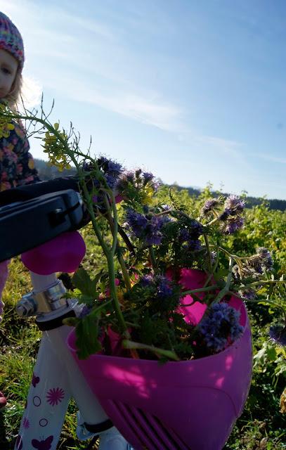 Büschelschön, Frühling, Gamander-Ehrenpreis, Gänseblümchen, Rapsblüten, rote Taubnesseln