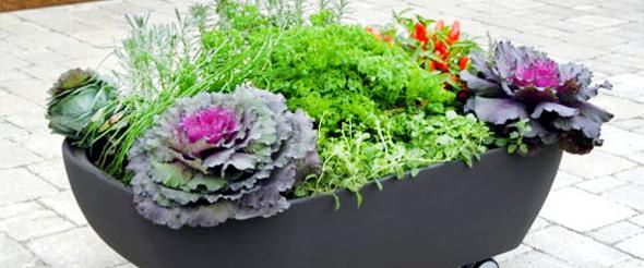 plantas jardim pequeno:Ideias para o Jardim: Jardins pequenos