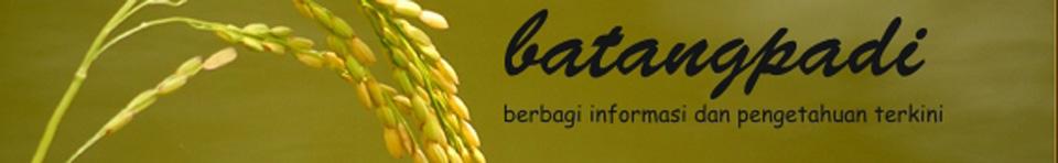 batang padi