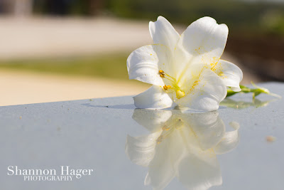 Shannon Hager Photography, Peace Prayer Memorial Park, Okinawa, Easter Lily