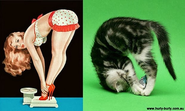 funny cat poses