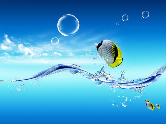 akvaryum sualtı deniz balık masaüstü arka plan resmi