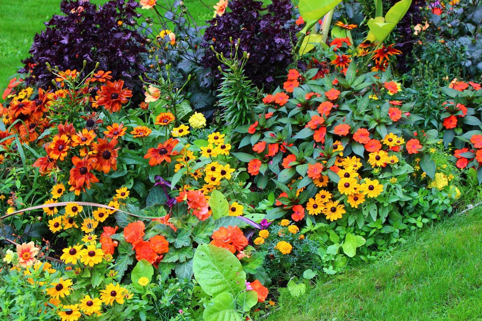 Roses du jardin ch neland un beau massif de plantes for Vasques pour fleurs jardin