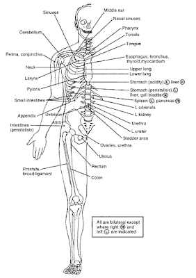 Skeletal System Introduction further Story also Basics Of Sitting 1 as well Hand Carpal Bones Diagram besides Patellasehne. on anterior knee diagram
