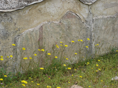 Yellow wildflowers next to ancient Roman frescoes