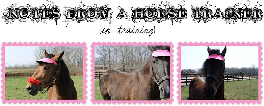 Notes From a Horse Trainer (In Training)