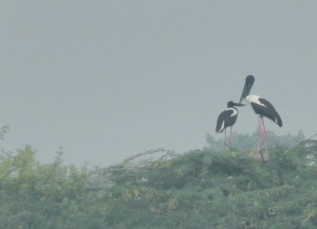 Birding in Sultanpur