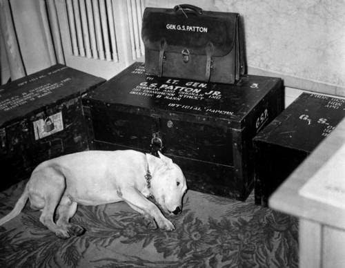 Ultimate Collection Of Rare Historical Photos. A Big Piece Of History (200 Pictures) - George S. Patton's Dog, Willie