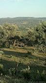Desde el Cerro de la Higueruela