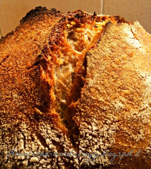 pane : no knead bread  di jim lahey  cotto in pentola con farro  e lievito madre