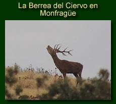 http://iberian-nature.blogspot.com.es/p/ruta-tematica-la-berrea-del-ciervo.html