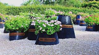 Le jardin des 101 pelargoniums