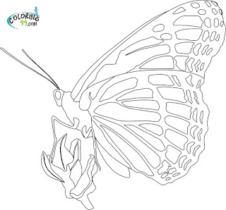 Monarch Butterfly Cocoon Coloring